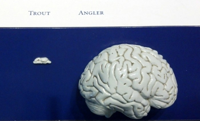 An exhibition includes a display of the average brain size of a trout and a human. Who out-thinks who on the Adirondack waterways?