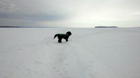 Tucker the Dog out on Oneida Lake